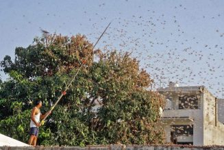 Indian Farmers are Using Dance Music to Fight Against Invading Locusts