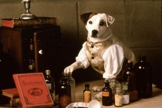 Wishbone to Bark Up More Literary Tales in New Movie