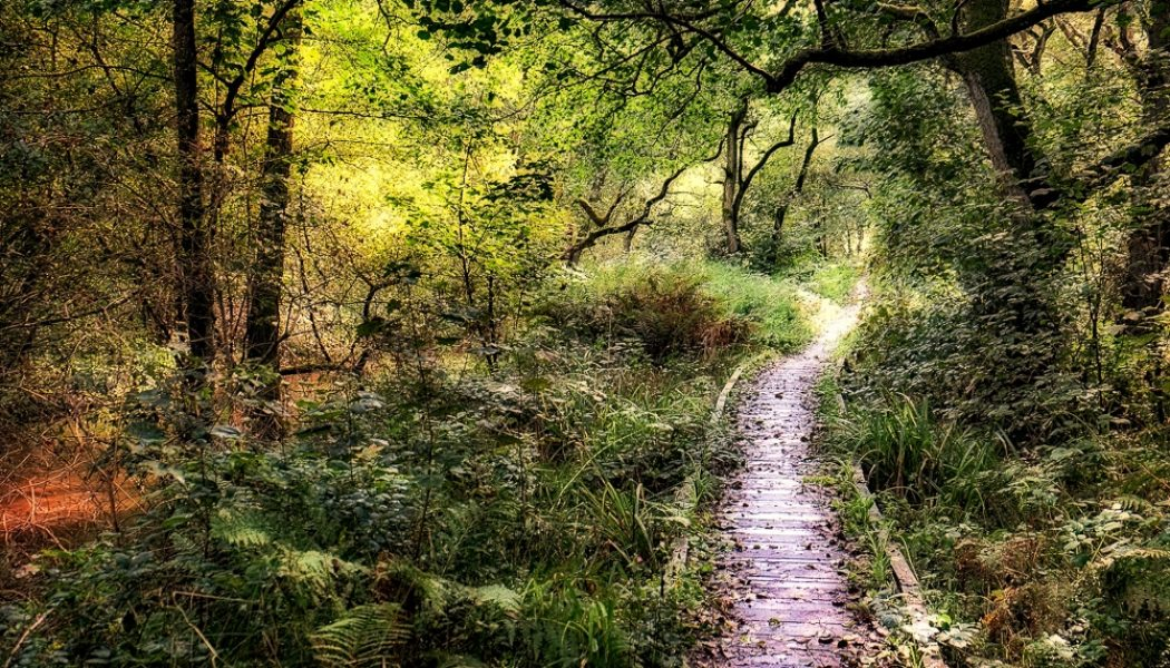 12 best hikes in the North York Moors National Park