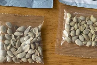 Go read this Motherboard report on what some people did with the 'Chinese Mystery Seeds'
