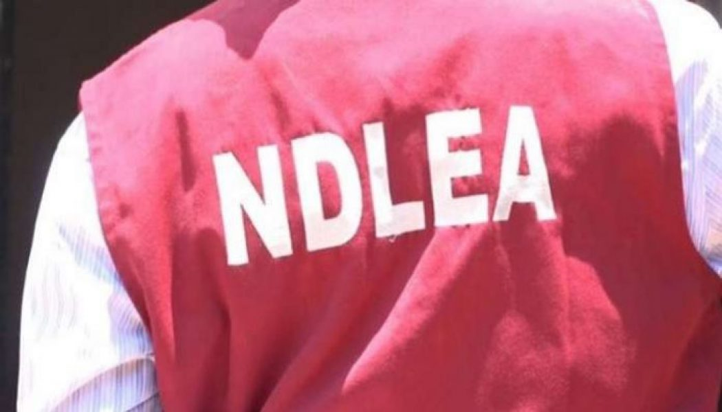 NDLEA clarifies stand on drug integrity test for intending couples