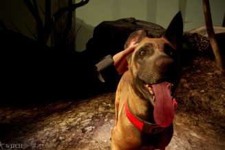 Blair Witch: Oculus Quest Edition will let you pet its dog in VR this month