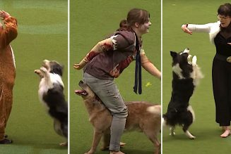 """Dogs Dance Competitively to Evanescence's """"Bring Me to Life"""" and Michael Jackson's """"Thriller"""": Watch"""