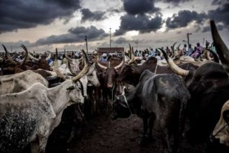 Cattle breeders to set up ranches in South-East