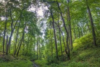 World Forest Day: Nigeria's forests reduced to less than 25% – environmentalists