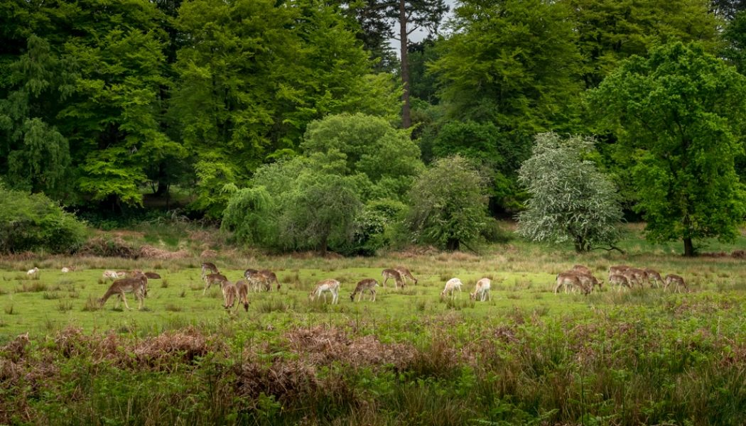 10 best hikes in New Forest National Park