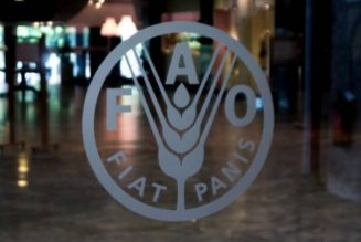 FAO reiterates support to Nigerian government's efforts to tackle food insecurity