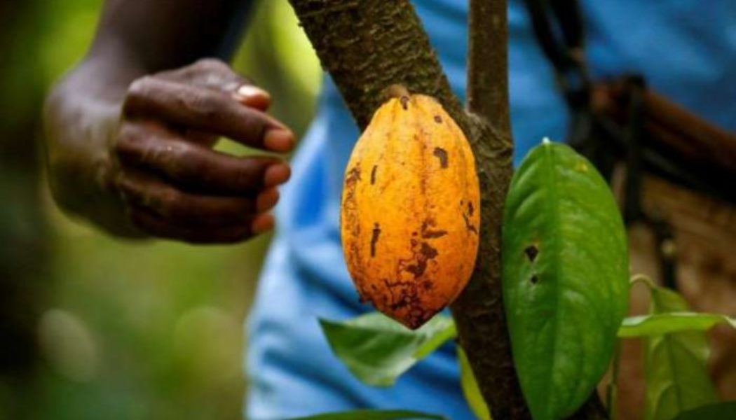 Ivory Coast says chocolate traders failing to pay farmers living wage premium