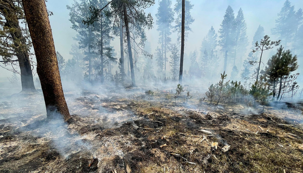 'We're going to see more' wildfires, Oregon governor warns