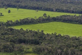 Facebook is trying to stop the sale of Amazon rainforest land on its Marketplace